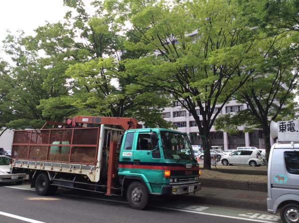 福島県庁前に到着した希望の牧場のトラック。荷台には、斑点症状の牛。  Arriving in Tokyo